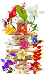 bois fleuri