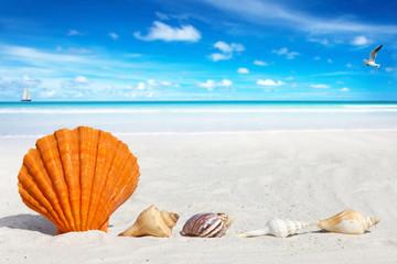 Jakobsmuschel und kleine Muscheln am Sandstrand