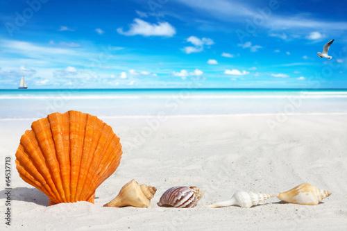 canvas print picture Jakobsmuschel und kleine Muscheln am Sandstrand
