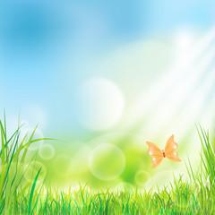 Sonnenenergie - Hintergrund - Wiese