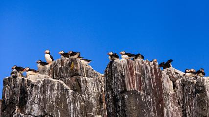 Farne Islands Bird Colony
