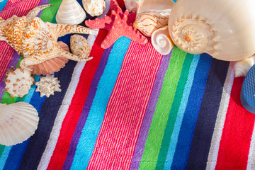 sea shells on beach towel