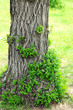 Obrazy na płótnie, fototapety, zdjęcia, fotoobrazy drukowane : Beautiful spring leaves on bark of tree, outdoors