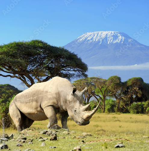 Foto op Canvas Neushoorn Rhino in front of Kilimanjaro mountain
