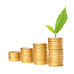 Savings, increasing columns of gold coins and green plant