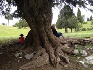 yaşlı ağaç altında oturmak