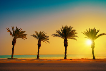 Tropical beach with palm trees at sunset background. Dead Sea be