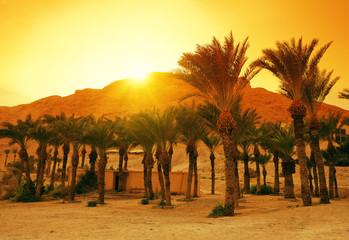 Date palms near Masada fortress in Israel