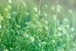 Little wild meadow flowers