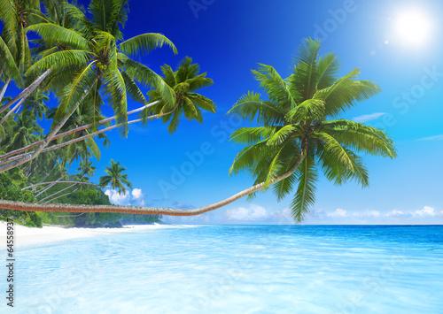 Tropical Paradise Beach - 64558937