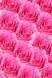 Rosen Background pink