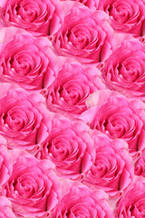 Rosen Background pink