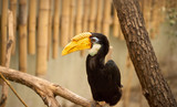tropical Hornbill bird Kanvas Tablo