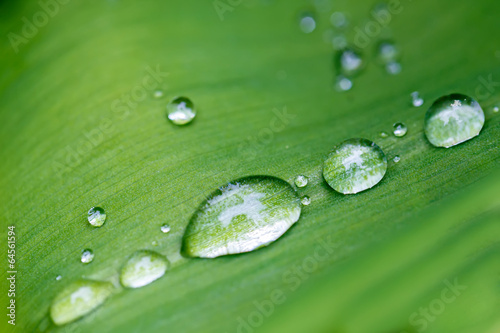 Rain drops on flower leaf close up