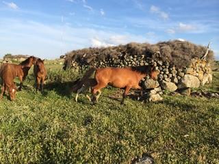 Kahverengi Atlar