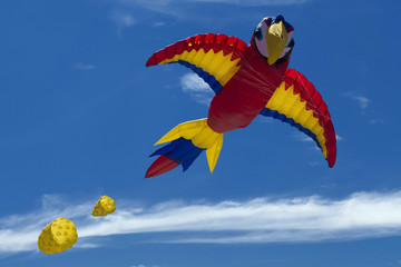 Parrot kite on the sky background