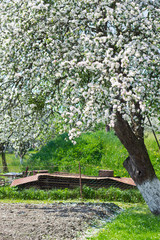 flower tree in garden