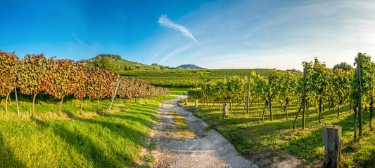 Weinlagenwanderung Bergstraße