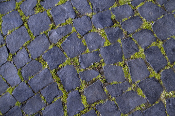 black cobblestone road covered with moss