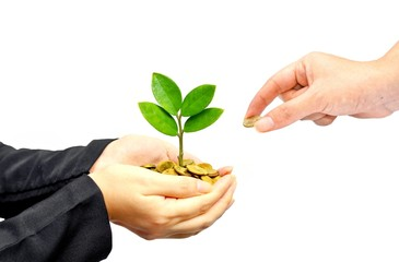 hands holding tree growing on golden coins - saving money
