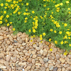 Yellow flowers and pebble stone