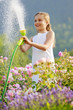 Summer garden, watering roses with garden hose