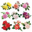 Obrazy na płótnie, fototapety, zdjęcia, fotoobrazy drukowane : Set of multicolored roses