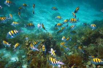 Underwater fish school swim on coral reef