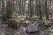 photo of forest in middle Europe