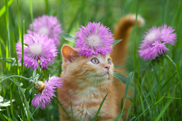 Cute little kitten walking  among  flowers on the grass