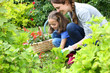 Little girl helping her mother to do gardening - 64575921