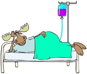 Sick moose in bed