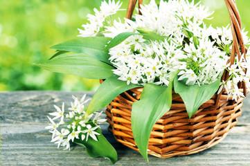 Bärlauchblätter und -blüten im Körbchen