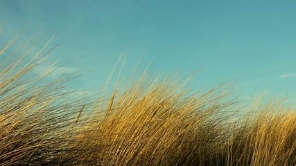 seegras am strand im wind