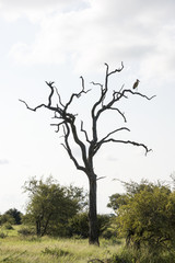 tree in nature with marabou on top