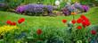 Obrazy na płótnie, fototapety, zdjęcia, fotoobrazy drukowane : Gartenansicht mit Tulpen und Polsterphlox