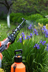Protecting flower plant from fungal disease gardening concept