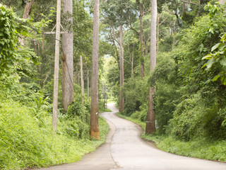 Curved road in forest on hill in Chiang Dao, Chiang Mai Thailand