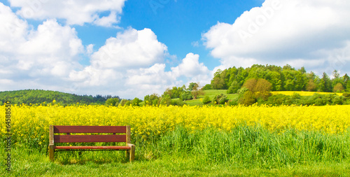 canvas print picture Ruhebank am Rapsfeld