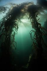 Kelp Forest 4