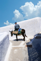Donkey on stairs of Santorini, traditional Greek life