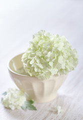 white hydrangea flowers in a ceramic bowl