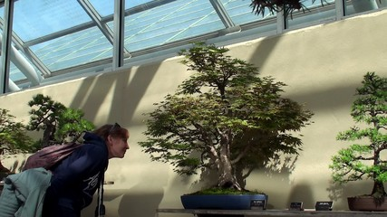 Visitor at the bonsai exhibition