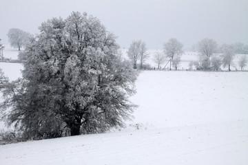Diesige Winterlanschaft mit Baum