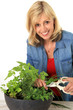 Woman cutting fresh herbs.
