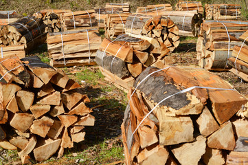 prepared Wood in the Forest