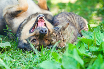 Dog and cat playing together outdoor. Dog lying on the back.
