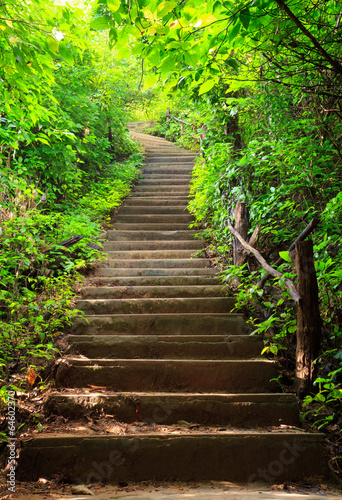 Papiers peints Autre Stairway to forest