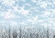 空と木背景・冬空