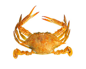 Steamed blue swimmer crab